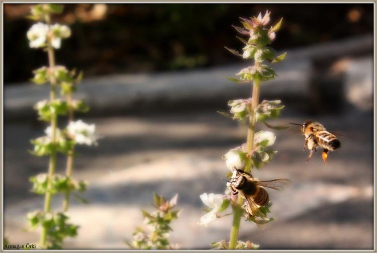 gambar tawon